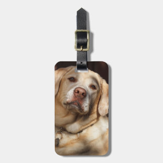 Labrador Retriever 2 Bagagebricka