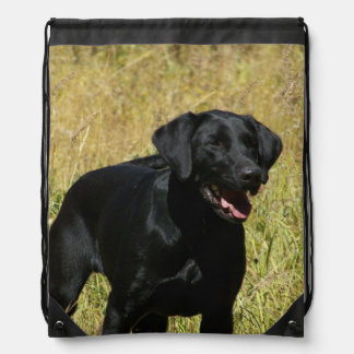 Labrador Retriever Gympapåse