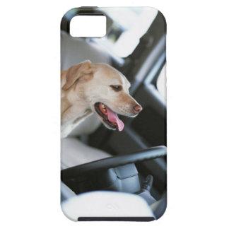 Labrador retriever iPhone 5 fodraler