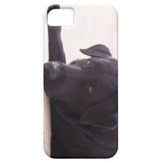 labrador retriever iPhone 5 skal