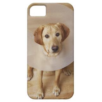 Labrador retriever med kotten runt om hans nacke iPhone 5 hud