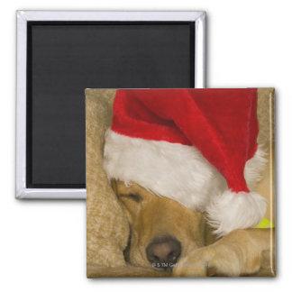 Labrador som ha på sig en röd helgdagSanta hatt Magnet