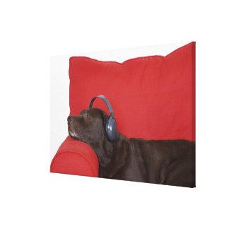Labrador som ha på sig hörlurar som ljuger på canvastryck
