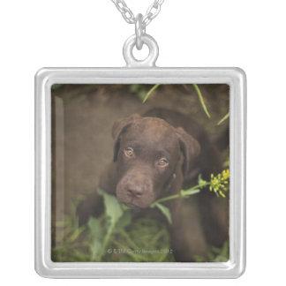 Labrador valpsitta i gräs silverpläterat halsband
