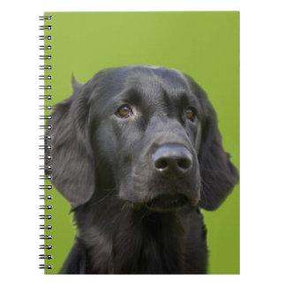 Lägenhet jackad Retrieverhundsvart, härligt foto Anteckningsbok Med Spiral