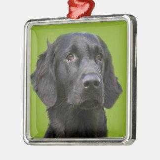 Lägenhet jackad Retrieverhundsvart, härligt foto Julgransprydnad Metall