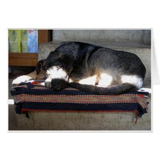 Lagra hunden hälsningskort