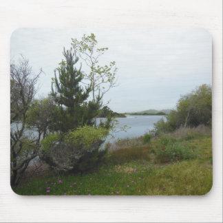 Laguna sjön, San Luis Obispo, efter regnar Musmatta