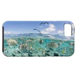 Lagunsafariresa som presenterar Stingrays iPhone 5 Case-Mate Fodral