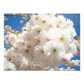 Läka blommigt för tryck för konstblommarfotografi