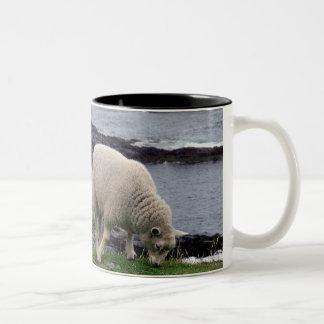 Lamb på den södra Devon för avlägsen vild kusten Två-Tonad Mugg