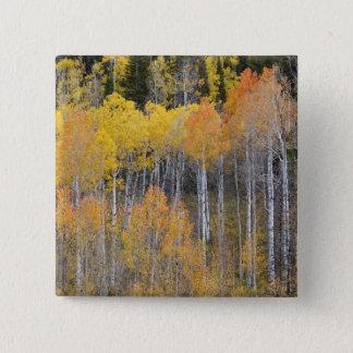 Lambert fördjupning, asp- träd 3 standard kanpp fyrkantig 5.1 cm