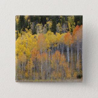 Lambert fördjupning, asp- träd 4 standard kanpp fyrkantig 5.1 cm