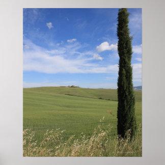 Landskap med Cypress Affischer
