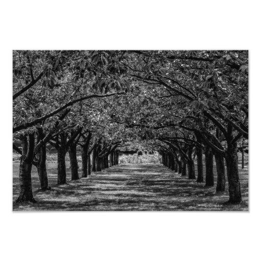 Landskap naturträd fotografiska tryck