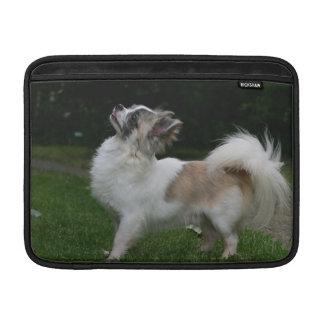 Lång Haired Chihuahua tittar kamera Sleeve För MacBook Air