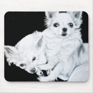Lång Haired Chihuahua vid sången Zeock Musmatta