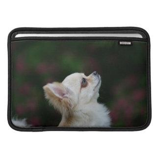Lång Haired ChihuahuaHeadshot 2 MacBook Sleeve