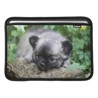 Lång Haired Chihuahuavalp Sleeve För MacBook Air