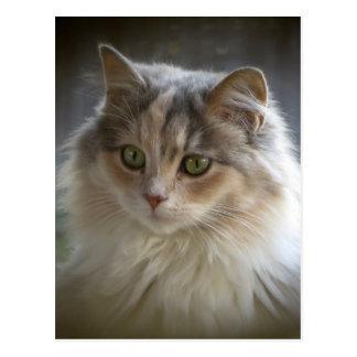Lång Haired kattunge Vykort