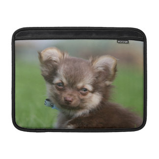 Långhårig tittar kamera för Chihuahua valp Sleeve För MacBook Air