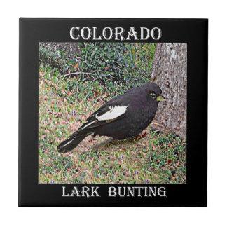 LarkBunting (Colorado) Kakelplatta