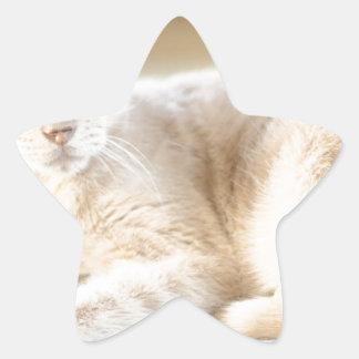 Larry Stjärnformat Klistermärke