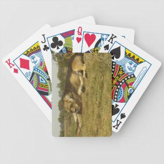 Lata lejona leka kort spelkort