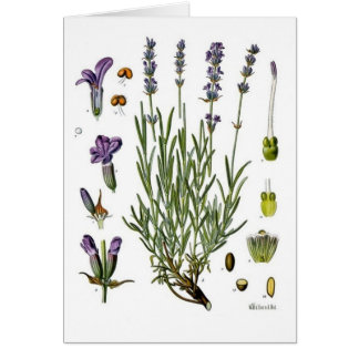 Lavendel Hälsningskort