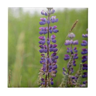 LavendelalaskaboLupines Kakelplatta