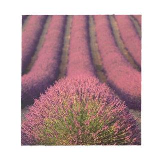 Lavendelfält i kicken Provence, frankrike 2 Anteckningsblock