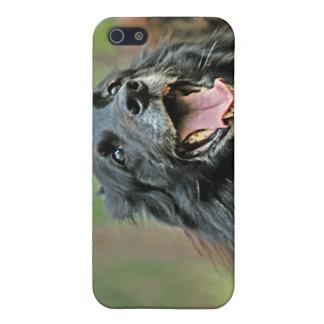 Le den svart hunden på en grön Bokeh bakgrund iPhone 5 Cover