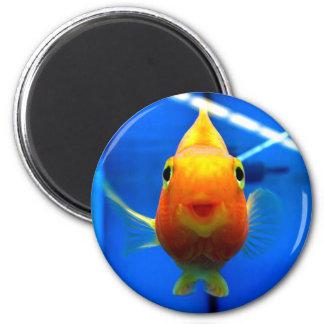 Le guldfiskrundamagneten magnet