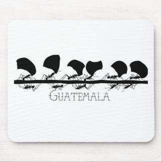 Leafcutter myra Guatemala Musmatta