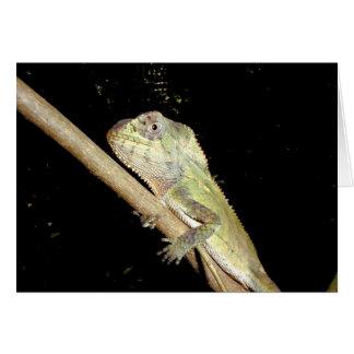 Leguan Manuel Antonio nationalpark Hälsningskort