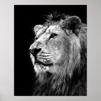 Lejon affisch för svart vit - djur fotografikonst