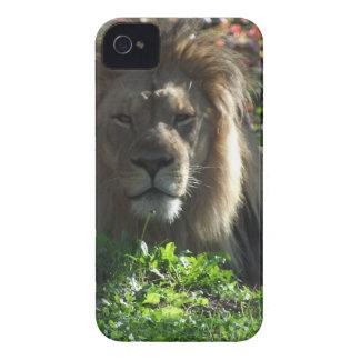 Lejon afrikan iPhone 4 Case-Mate case