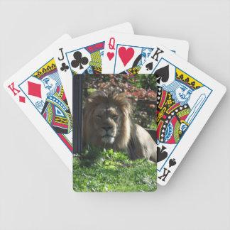 Lejon afrikan spelkort
