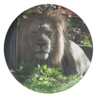 Lejon afrikan tallrik