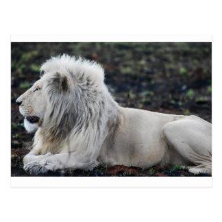 Lejon afrikansk vit profilerar fotoet vykort