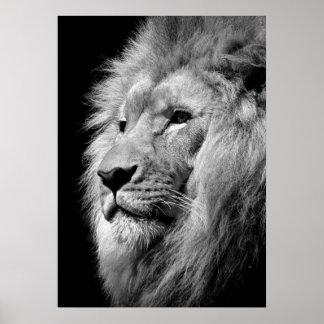 Lejon/djur fotografikonst för svart & för vit poster