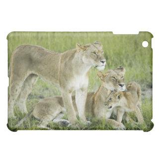 Lejon familj i Kenya, afrika iPad Mini Mobil Skal
