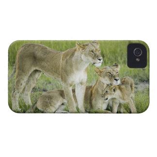 Lejon familj i Kenya, afrika iPhone 4 Case-Mate Case