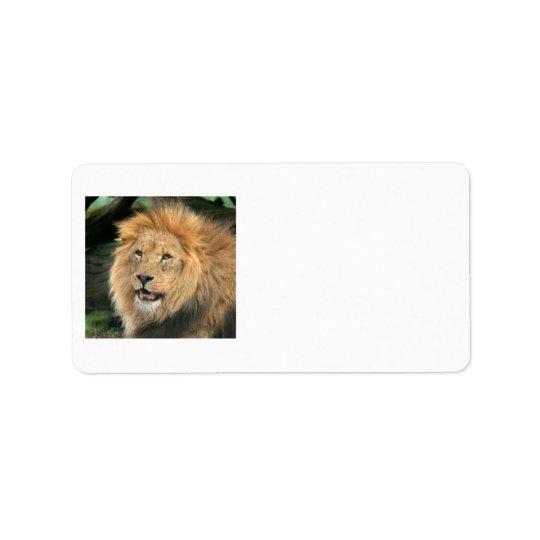 lejon head härlig male fotoadressetiketter adressetikett
