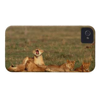 Lejon på en savanna iPhone 4 Case-Mate skydd
