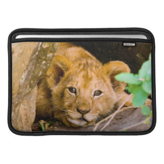 Lejon (Panthera Leo) unge i grottan, Maasai Mara MacBook Sleeves