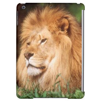 Lejon vuxen manlig