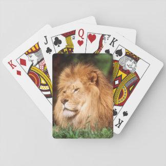 Lejon vuxen manlig spelkort