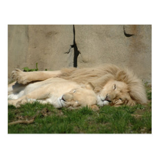 Lejona sömnar ikväll i din ärmar vykort