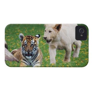 Lejona & tigerungar på lek iPhone 4 Case-Mate case